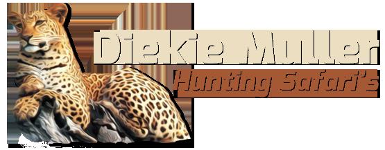 dm-safaris-logo